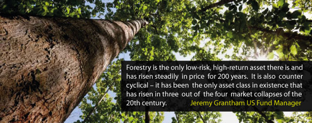 forestry-investments